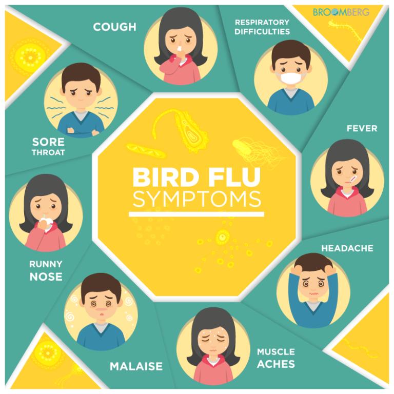 Bird Flu 2018