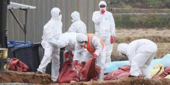 काठमाडौंमा फेरि भेटियो बर्ड फ्लू, एकैदिन साढे १२ हजार बढी कुखुरा नष्ट