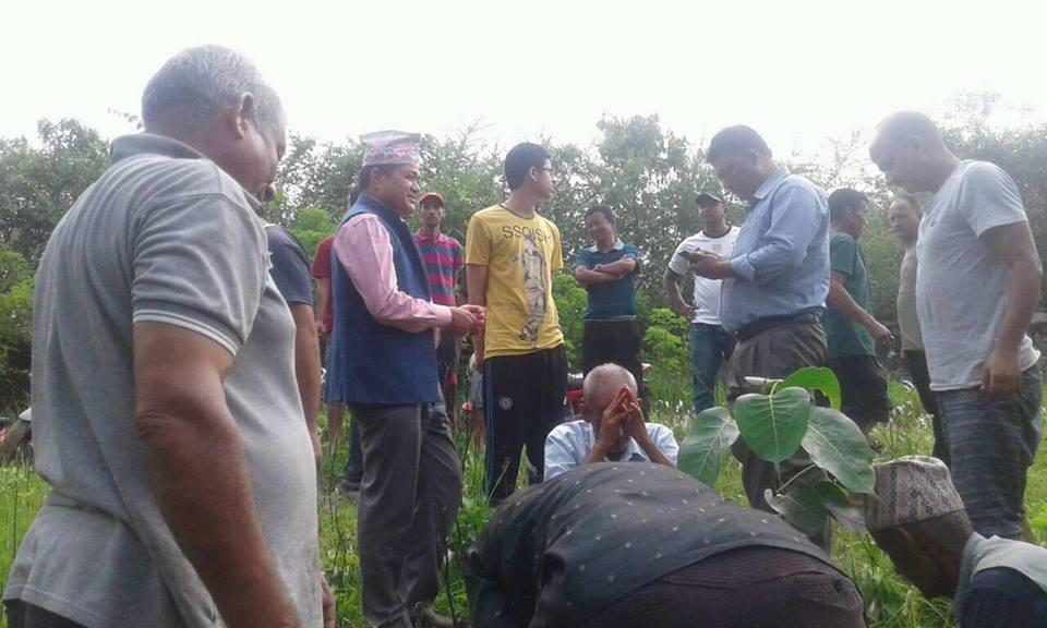 plantation bidur municipality nuwakot