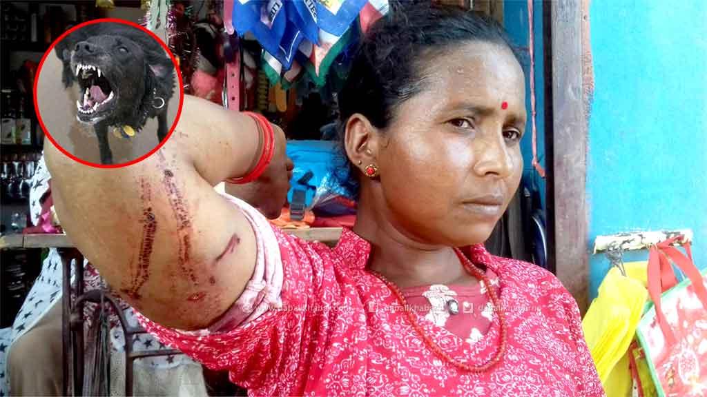 dog attack injury goma bika nuwakot suryagadhi rural municipality falate nuwakot