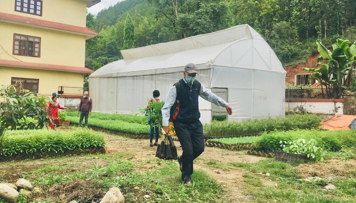 A farmer carrying a plant in Division Forest Office Nuwakot